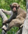 Monkey20080522_2