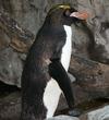 Penguin20080522