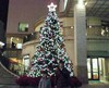 Tree20081220